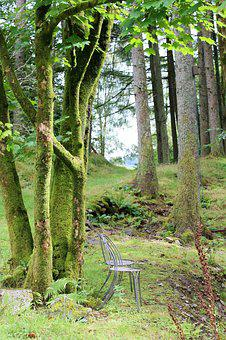 Vista, View, Opening, Clearing, Trees, Landscape, Chair