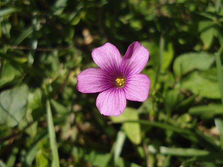 Flower, Rosa, Plant, Pink Flower, Flower Color Pink