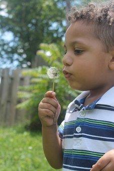 Pre-schooler, Boy, Dandelion Seeds, Kid