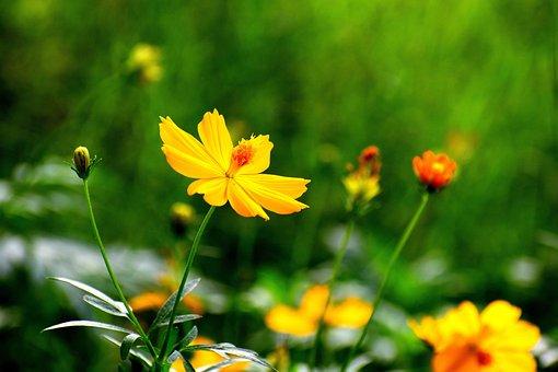 Flowers, Nature, Floral, Summer, Spring, Natural, Bloom