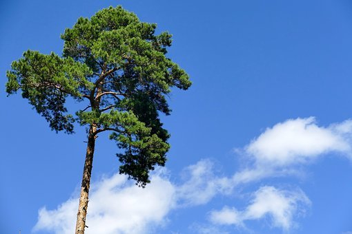 Tree, Sky, Clouds, Nature, Rest, Serenity, Blue, Green