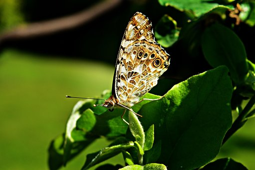 Butterfly, Nature, Insect, Flying Insect
