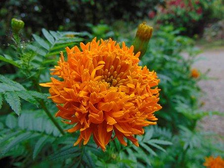 Flower, Orange, Yellow Flower, Orange Flower, Flowers