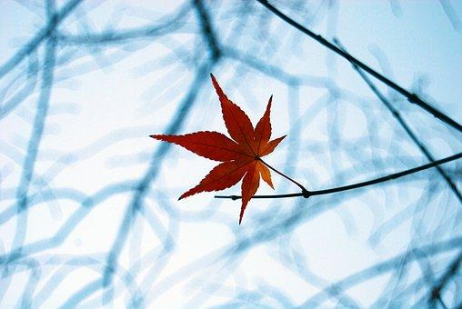 Fall, Leaf, Autumn, Season, Red, Nature, Seasonal
