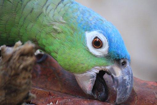 Macaw, Mexico, Ave, Bird, Zoo, Parrot, Animal