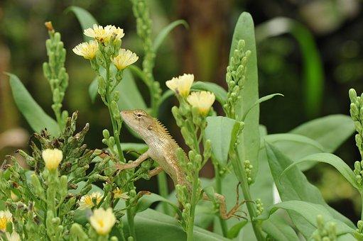 Lizard, Plants, Flowers, Macro, Eye, Exotic, Wildlife