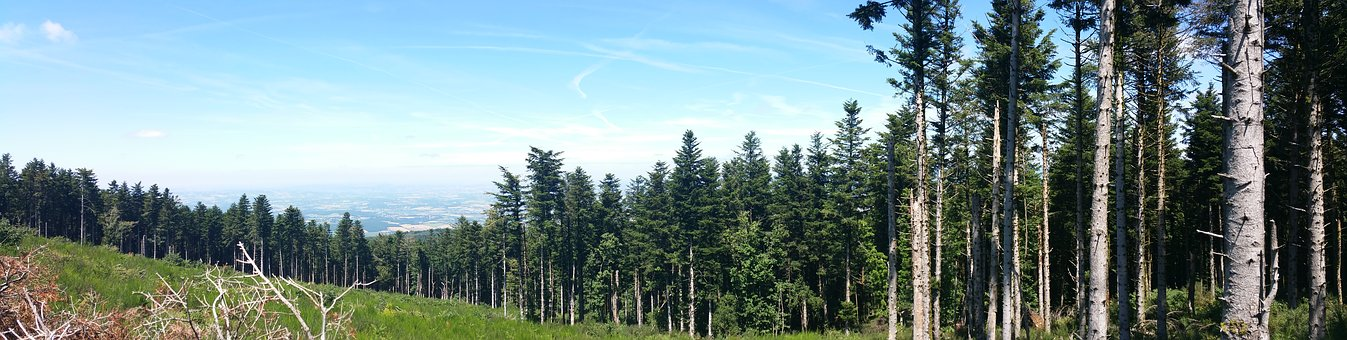 Mountain, Forest, Landscape, Nature, Trees, Alps