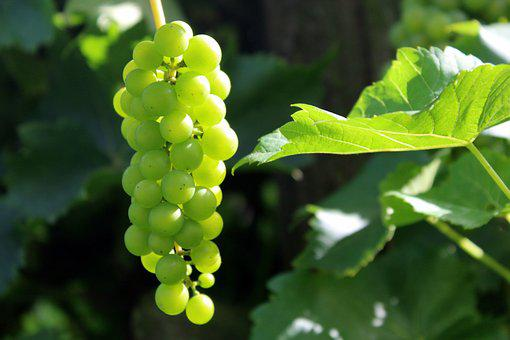 Grapes, Fruit, Nature, Fresh, Eating, Nutrition