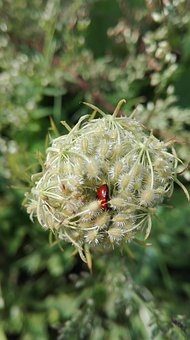 Nature, Insects, Of God, Ladybug