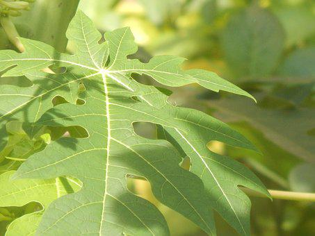 Leaves, Green, Large, Sunny