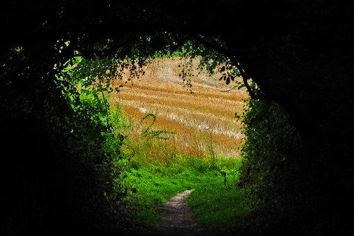 Landscape, Field, Nature, Agriculture, Wies, Rest