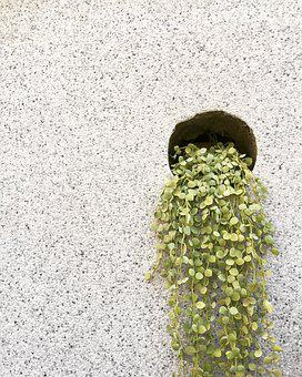 Plant, Green, Wall, Texture, Nature, Growth