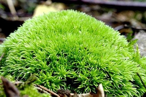 Moss, Green, Pillow, Forest, Undergrowth, Plating