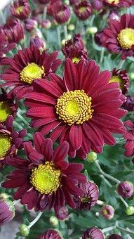 Purple, Flower, Yellow, Nature, Purple Flowers