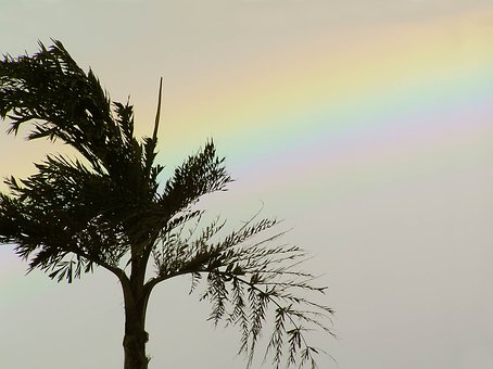 Palm, Tree, Rainbow, Palm Tree, Tropical, Summer