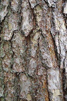 The Bark, Tree, Trunk, Spruce, Invoice, The Background