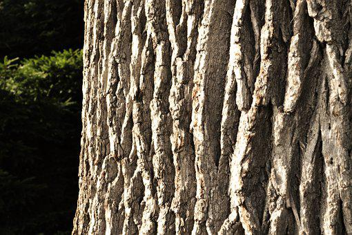 Bark, Tree, Nature, Log, Structure, Forest, Tribe, Wood