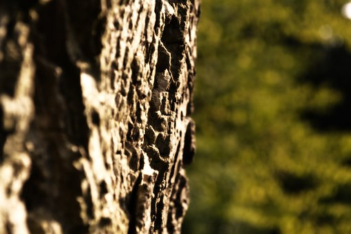 Bark, Tree, Close, Nature, Log, Structure, Oak, Forest