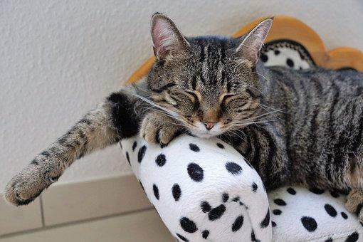 Cat, Rest, Tiger, Tigerle, Dalmatians, Dog, Sofa