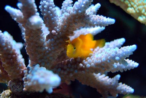 Coral, Reef, Sea, Underwater, Water, Fish, Marine