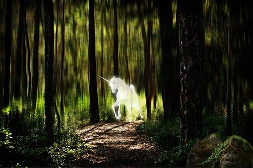 Unicorn, Forest, Fantasy Picture, Photo Montage