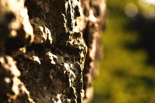 Bark, Tree, Nature, Log, Structure, Oak, Forest, Tribe