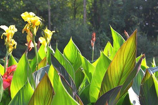 Yellow, Flower, Garden, Yellow Flower, Plant, Nature