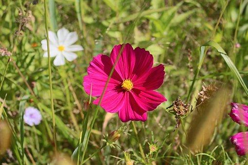 Flower, Pointed Flower, Grass, Flourished, Pink