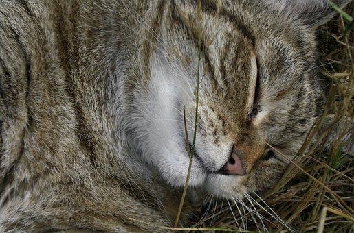 Cat, Sleep, Pet, Mackerel, Rest, Feel At Home, Relax
