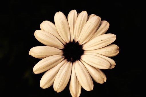 Blossom, Bloom, Cream, Fragrance, Nature, Beauty