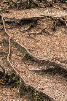The Roots Of The, Forest, Structure, Wood, Nature