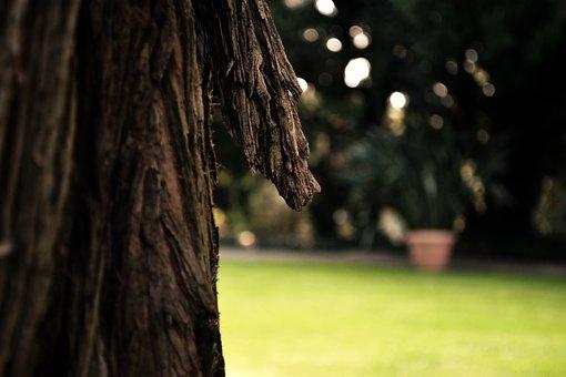 Bark, Tribe, Tree, Log, Nature, Wood, Oak, Palm
