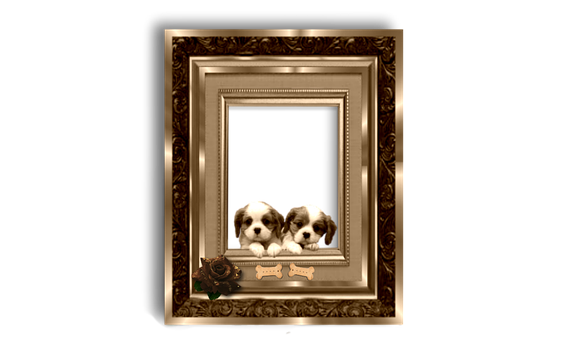 Gold, Dog, Puppy, Picture Frame