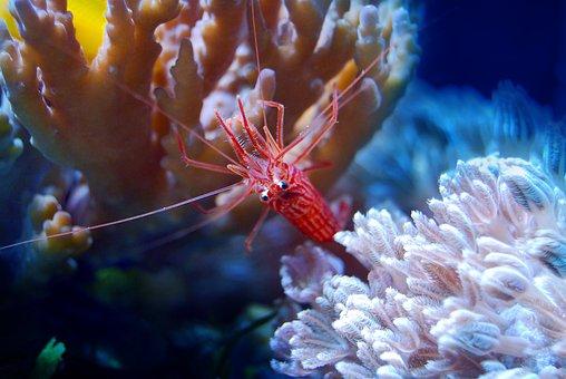 Coral, Reef, Sea, Underwater, Water, Marine, Ocean