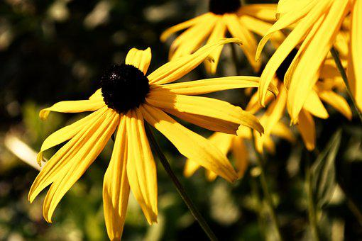 Yellow Flower, Meadow, Yellow, Summer, Flower, Plant