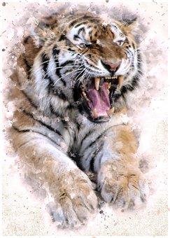 Tiger, Cat, Predator, Animal, Tooth, Roar, Dangerous