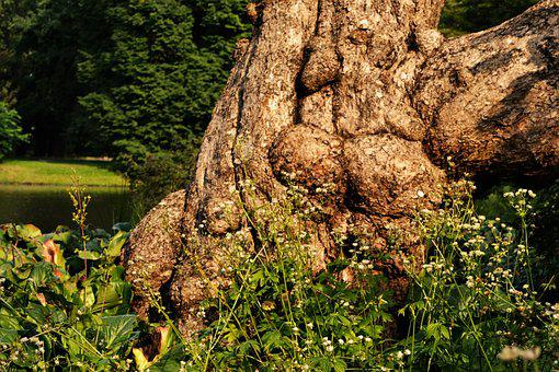Tree Root, Tribe, Brown, Tree, Log, Nature, Old, Rooted