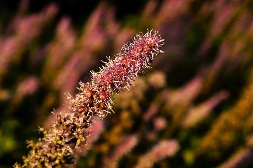 Meadow, Umbel, Summer, Blossom, Bloom, Wild Flowers