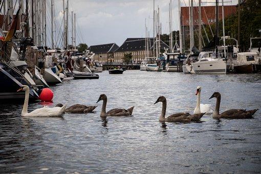 Ducks, River, Water, Animal, Wild, Nature, Bird, Lake