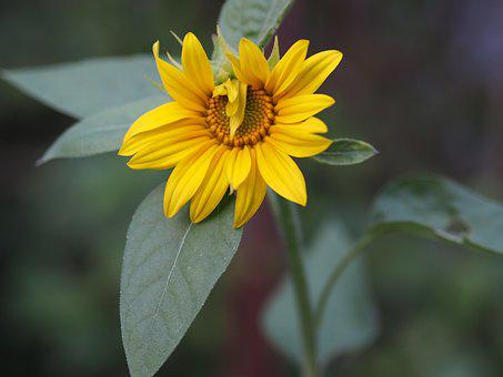 Flower, Yellow, Love, Blossom, Bloom, Plant, Nature