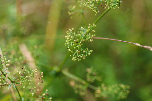 Nature, Growth, Green, Straw