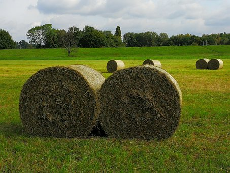 Agriculture, Straw Role, Round Bales, Harvested