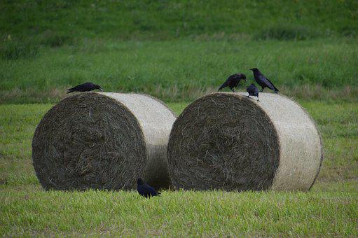 Straw Bales, Agriculture, Summer, Harvested