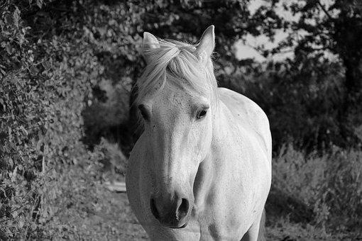 Horse, Head Face, Eyes, Nostril, Ears, Horseback Riding
