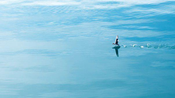 See, Marine, Blue, Landscape, Water, Peace, Nature