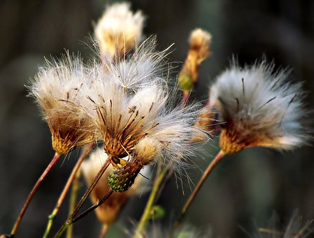 Plant, Thistle, Nature, Spikes, Meadow, Weed