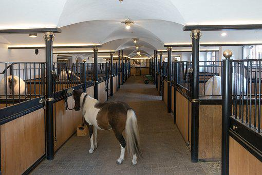 Stall, Horse Stable, Stud, Reiterhof, Pony, Lipizzaner