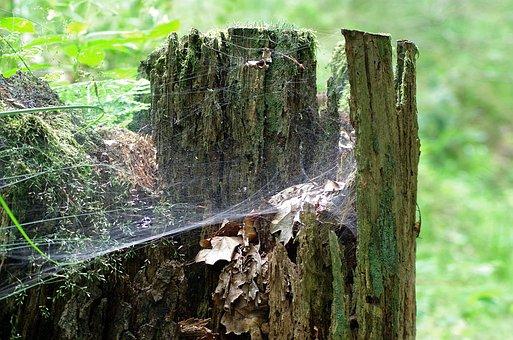 Próchniejący Stock, Stump, Cobweb, Forest, Moss, Nature