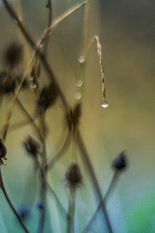 Water, Rain, Nature, Raindrop, Natural