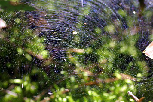 Cobweb, The Grid, Snap, Large, Trampoline, Designs